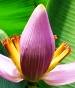 Banana flower can clear chest mucus